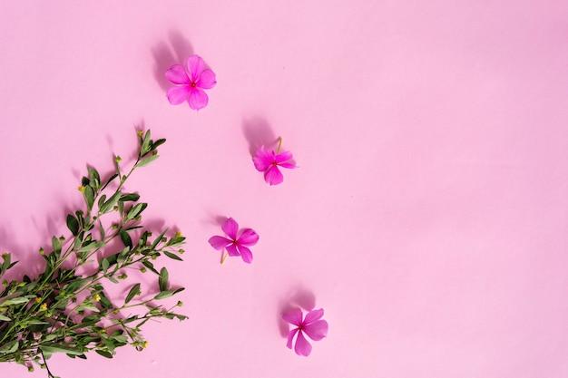ピンクの紙のテクスチャの背景、緑の植物や花マダガスカルツルニチニチソウ