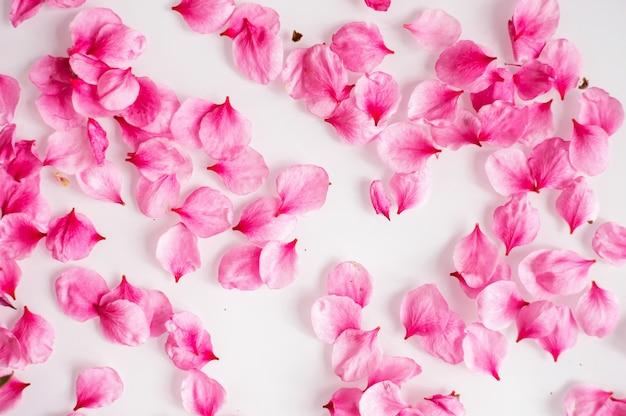 ピンクの桃の花びらが白い背景に散らばっています。自然な風合い。春とロマンスの概念。