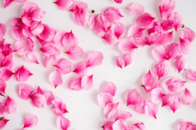 Pink peach blossom petals are scattered on a white background. natural texture. the concept of spring and romance.