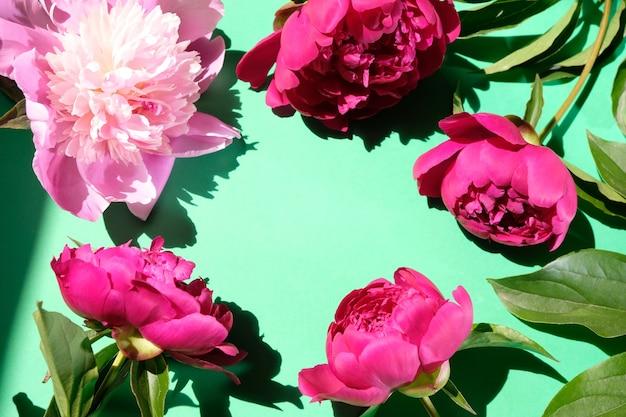 ピンクの牡丹とパステルカラーの表面にハードシャドウのある葉、コピースペース。トレンディなパターン、夏のコンセプト。上面図。トレンドシャドウの牡丹