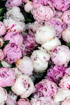 Розовые пионы фон, вид сверху