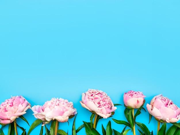 정원에서 자란 분홍색 모란은 파란색 배경의 하단에 연속으로 놓여 있습니다.