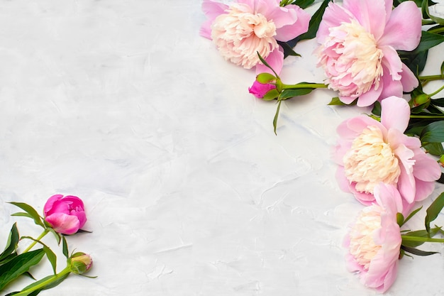 Pink peonies on white background.