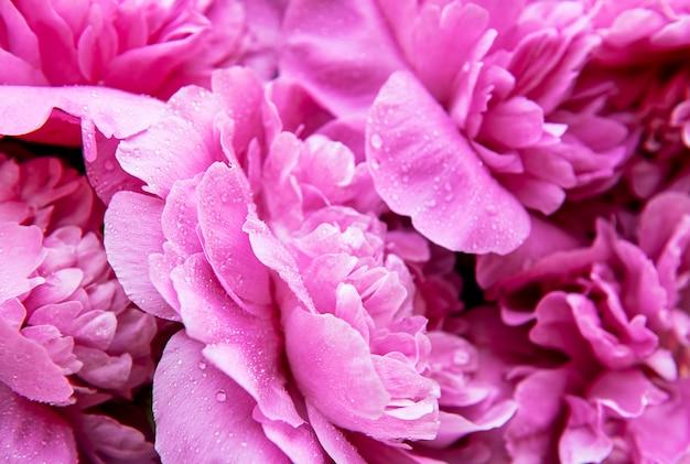 방울과 분홍색 모란