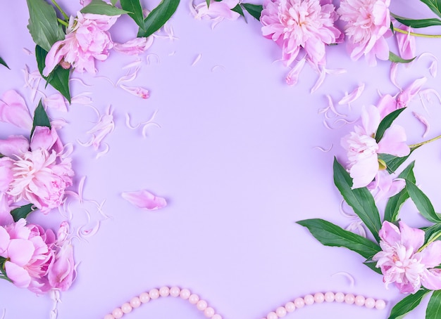 Pink peony flower and scattered petals on a pink background with copyspace