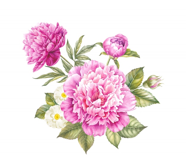 Pink peony flower watercolor illustration.