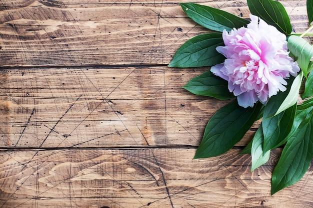 葉とピンクの牡丹の花