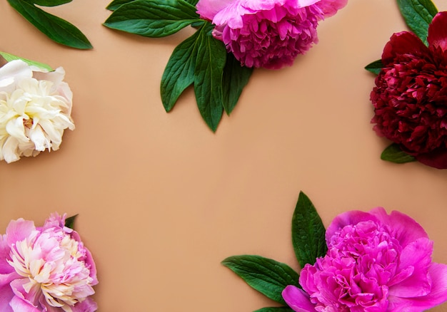 Pink peony flowers as a border on a brown surface