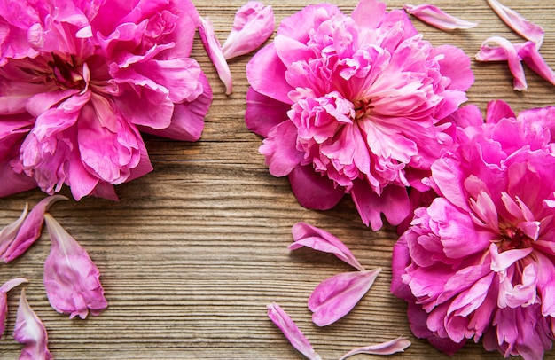 Pink peony flowers as a border on a old wooden background