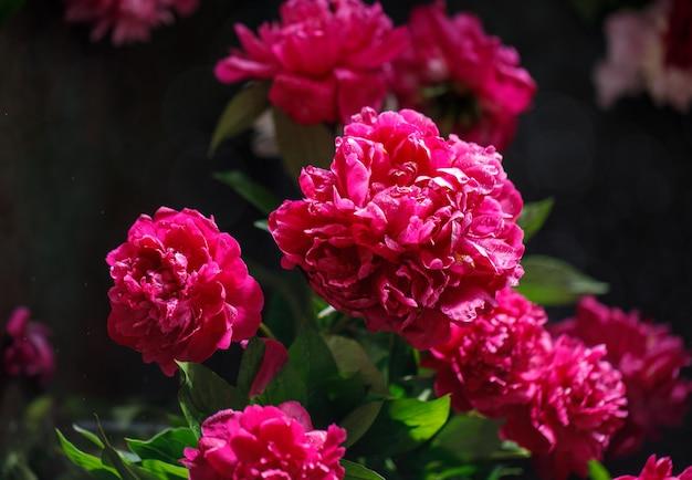 Букет розовых пионов на деревенском фоне с копией пространства