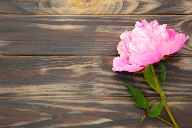 Pink peony flowers on brown wood.