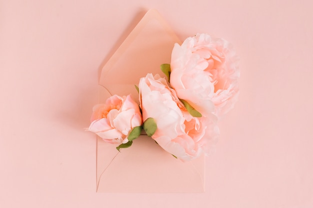 Pink peony flowers in the envelope on colored background