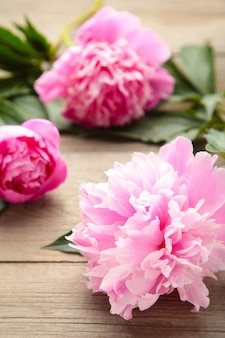 Pink peony flowers on grey wooden background.