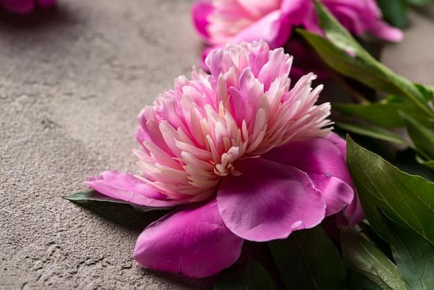 Pink peony flowers on light surface