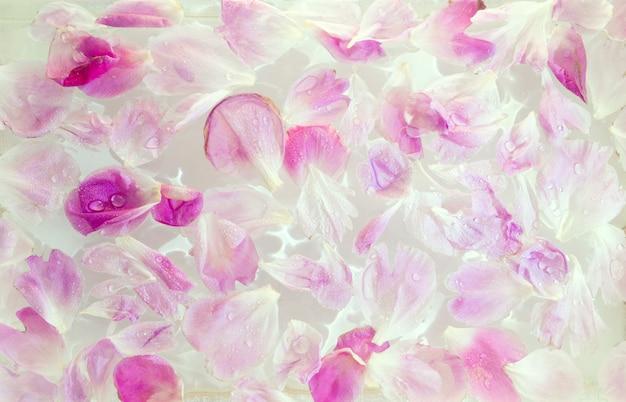 Розовый пион в молочной воде. лепестки цветов в ванне с молоком