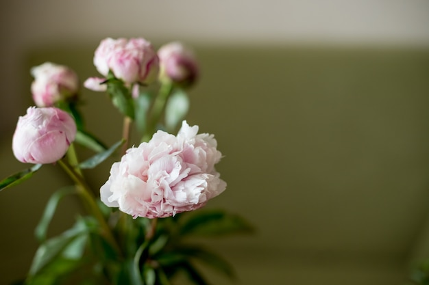 Pink peony in a vase, toned image. fresh bunch of pink peonies on light background.