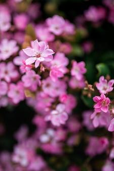 ピンクの花びらの花