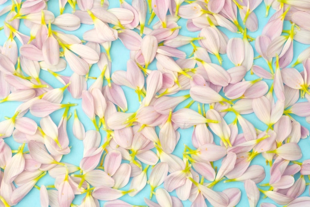 Pink petals on a colored background. floral spring background