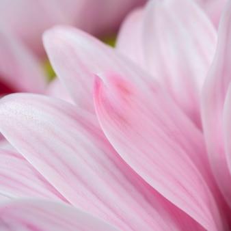 Primo piano dettagliato dei petali rosa