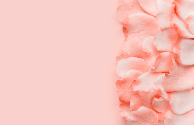Pink petals on a pastel pink background, minimal style. flat lay, copy space.