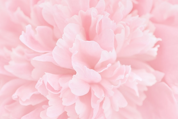 Pink petals with blurred focus