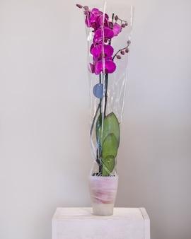 ピンクの胡蝶蘭、鍋に蛾の蘭の花