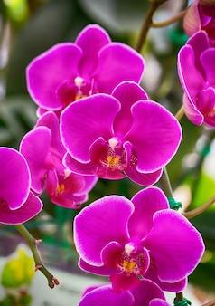 Розовый цветок орхидеи фаленопсиса Бесплатные Фотографии