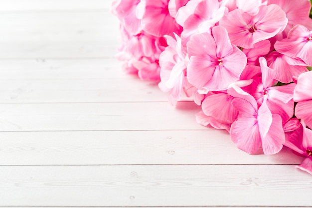 Pink phlox flowers on white table.