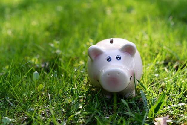 Pink piggy bank for ionnet and money on green grass to save finances