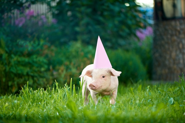 Pink piggy wearing pink festive cap, standing in garden on green grass.