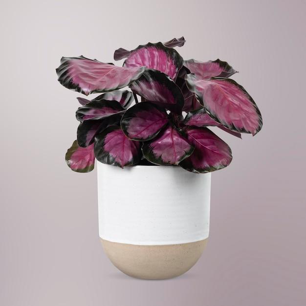 白い鍋にピンクの植物