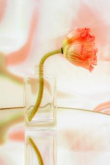 Fiore di papavero rosa in un vaso di vetro trasparente