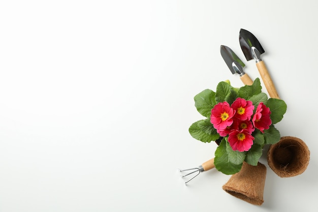 Pink primrose and gardening tools on white background, top view