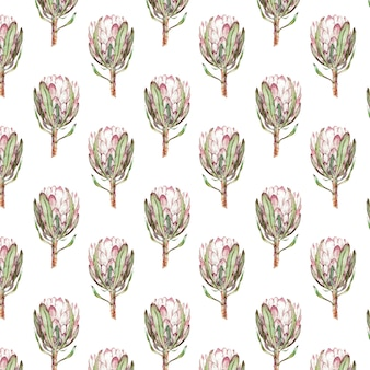 Pink protea flower watercolor illustration.