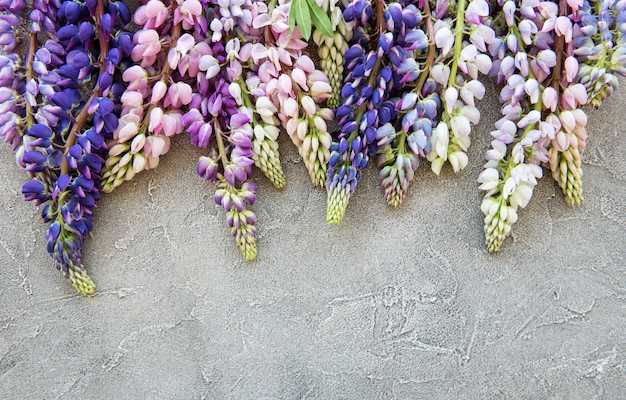 Pink and purple lupine flowers top view