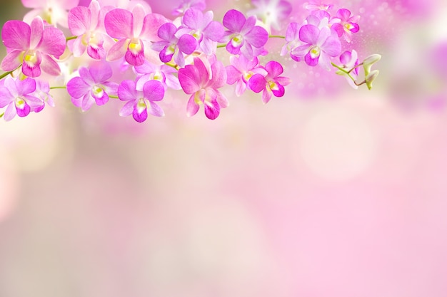 Pink and purple orchid flower border background