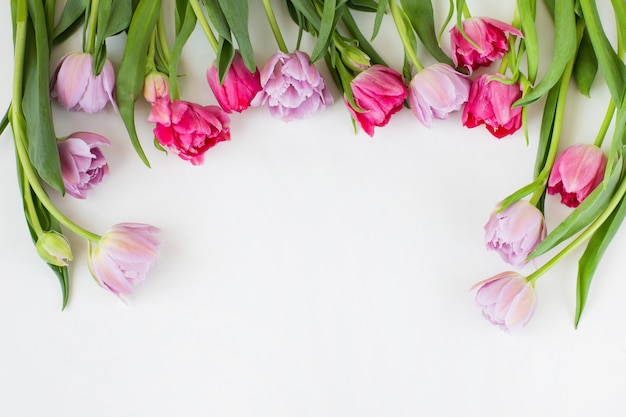 Pink and purple tulips are framed and free space for text.