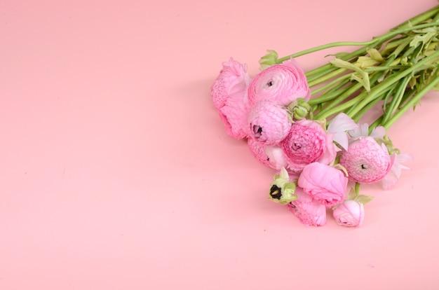 Pink ranunculus for background