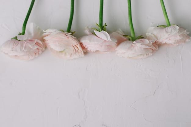 Розовая ваза лютик на белом фоне