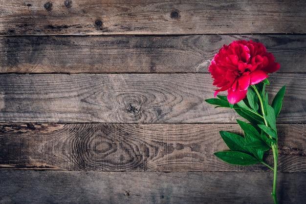 Розовые красные пионы марсала на белом деревенском деревянном столе с копией пространства сверху и плоской планировкой.