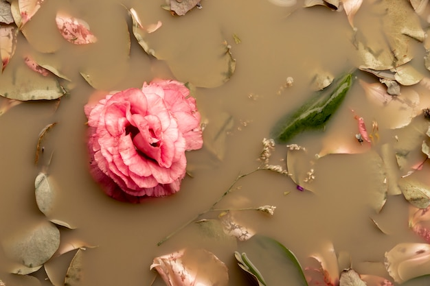 Pink rose in brown colored water