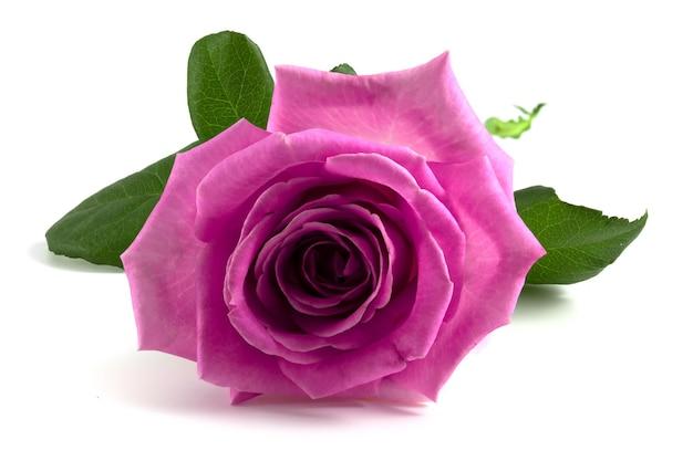 Бутон розовой розы, изолированные на белом фоне.