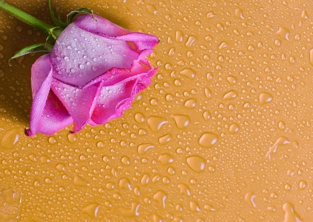 水滴のオレンジ色の表面にピンクのバラのつぼみ。コピースペース。上面図。