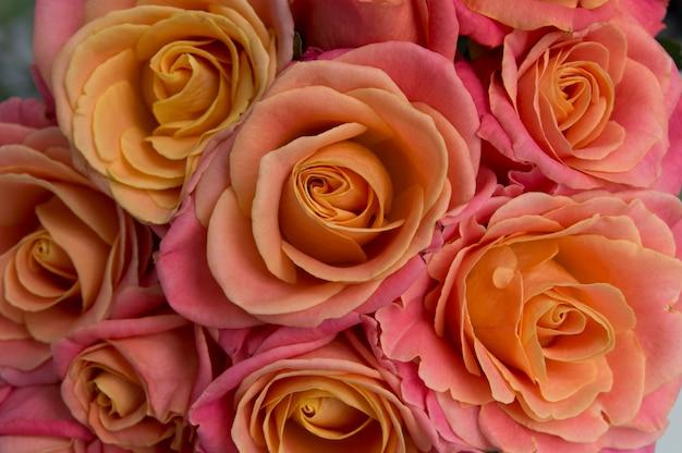 Pink rose closeup background