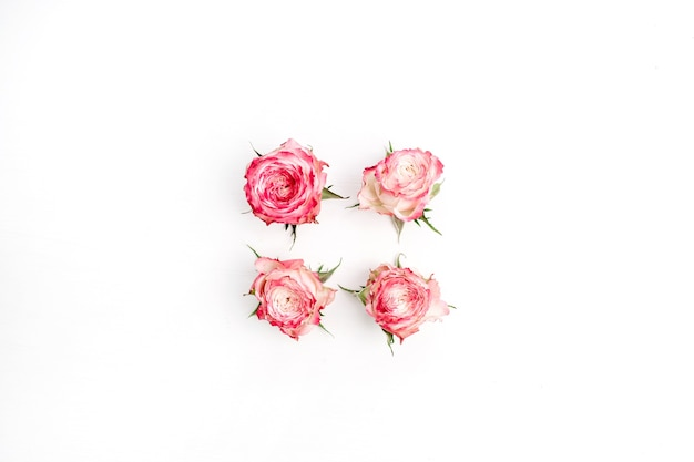 Pink rose flower buds isolated on white background. flat lay, top view