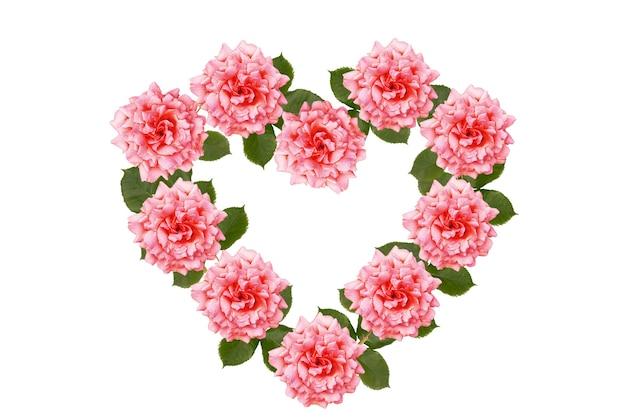 白い表面に分離されたピンクのバラの花。