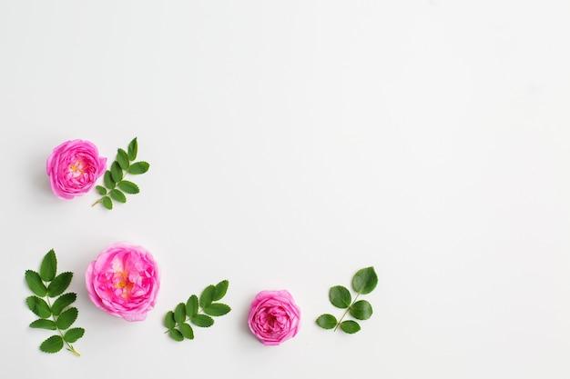 Розовые розы цветы и зеленые листья на белом фоне