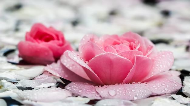 분홍색 장미 꽃과 흰색 꽃잎이 물방울과 흐릿한 배경 아로마테라피 및 스파 개념