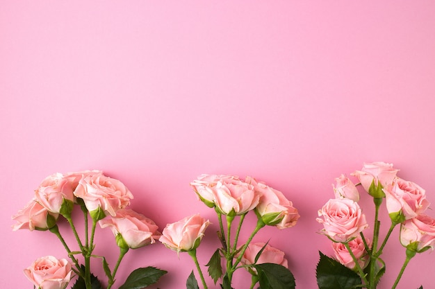 Pink rose flowers on pastel pink background.