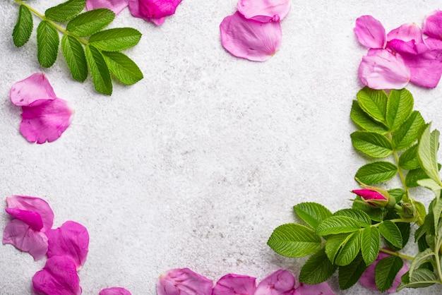Розовые лепестки розового бедра с листьями